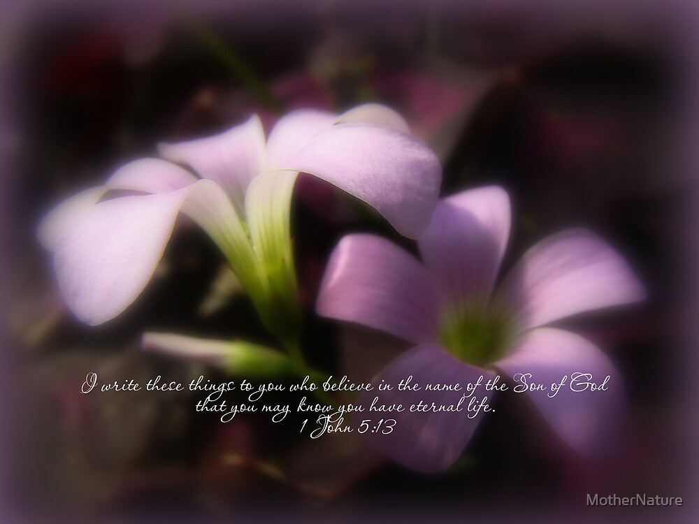 Easter Scripture Greeting Card - Pink Oxalis by MotherNature