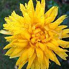 Yellow Flower © by Ethna Gillespie