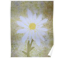 Textured Daisy  Poster