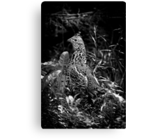 Near Perfect Cammo Canvas Print