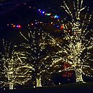Christmas at Longwood - 2014 by cclaude