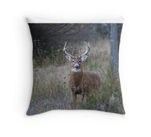 White-tailed buck Throw Pillow