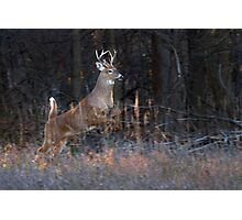 Buck Jump - White-tailed deer Photographic Print