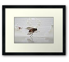 Not I said the Spider to the Fly Framed Print