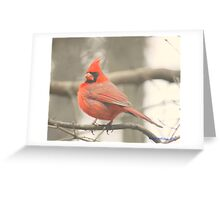 Little Red Bird Greeting Card