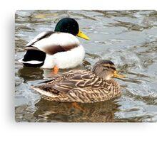 A pair of ducks Canvas Print