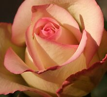 Seduction Rose by Gabrielle  Lees