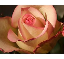 Seduction Rose Photographic Print