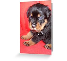 Cute Rottweiler Puppy With Food On Muzzle Greeting Card