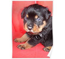 Cute Rottweiler Puppy With Food On Muzzle Poster