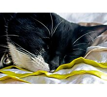 Trotski The Cat Photographic Print