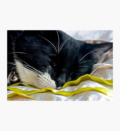 Trotski The Cat Photographic Print