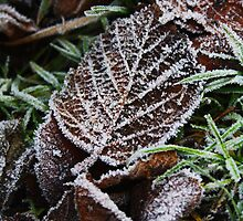 Frosty Leaf by Ben Johnson