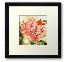 Orange geranium flowers Framed Print