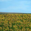 yellow army by botticceli