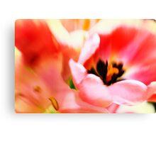 Hot pink spring tulip Canvas Print