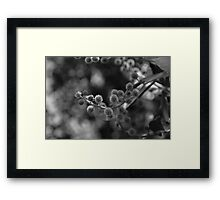 Fluffy Nature Framed Print