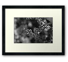 Fluffy Nature Framed Print