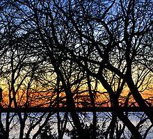 BEYOND THE TREELINE  by webdog