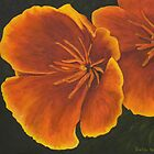 Californian poppies by Beth Neden