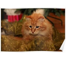 pedro under the christmas tree Poster