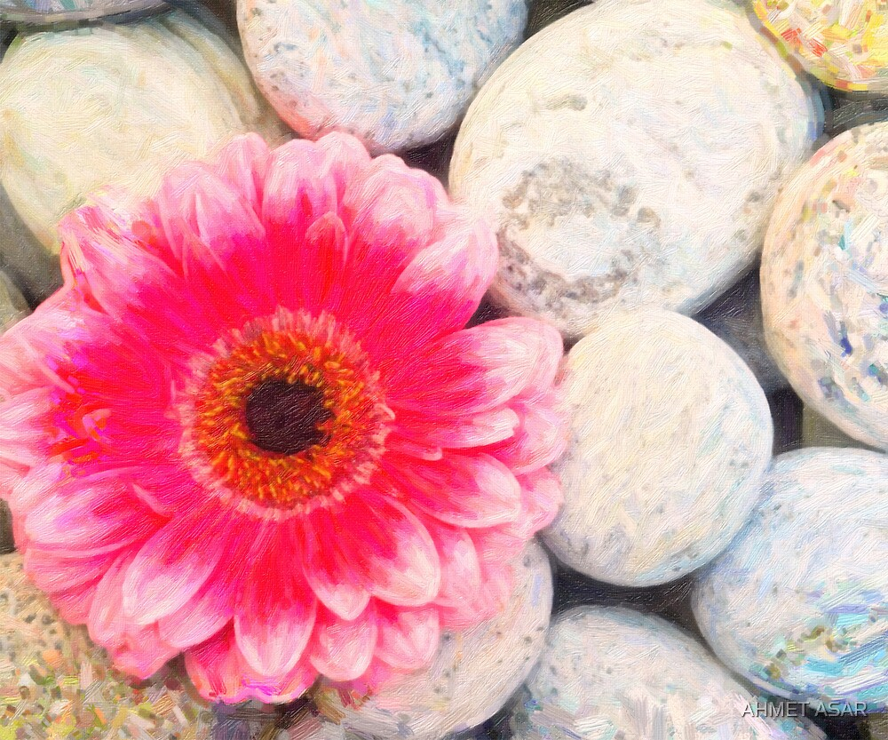 Pink flower and zen stone by Adam Asar