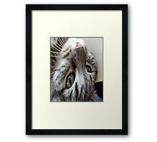 Baby Cat Montes Upside Down Framed Print