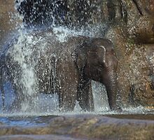 Elephant shower by Norma Cornes