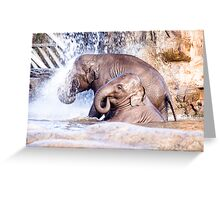 Elephant shower Greeting Card