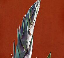 Blue Agave by Eileen McVey