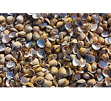 She sells sea shells on the sea shore. Photographic Print