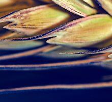 Sharp Edges by Sandra Parlow