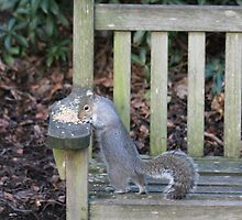 Squirrel on a bench by Philip McConnell
