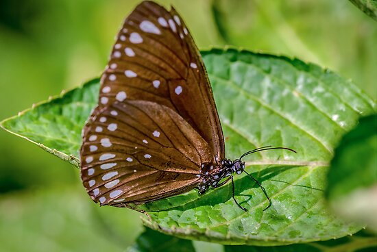 Butterfly on Leaf by robyn70