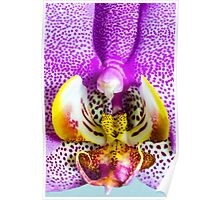 Orchid Up Close Poster