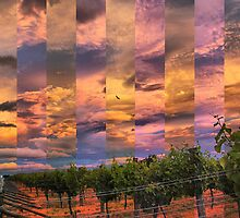 Sunset over the vineyard by andreisky