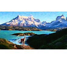 Torres del Paine National Park and the Llama, Chile Photographic Print