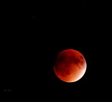 September Blood Moon by WildThingPhotos