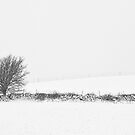 Minimalist Winter Landscape by Tim Haynes