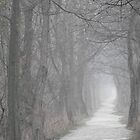 Path in the Fog by Veronica Schultz