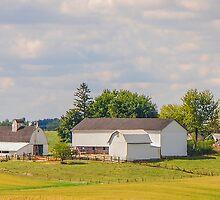 Amish Farm by Mary Carol Story