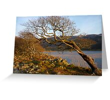 The wind prevails : at Llyn Cwm Bychan Greeting Card
