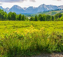 View Of The Grand Tetons by mcstory