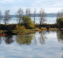 Macquarie River, Ross, Tas by Wendy Dyer