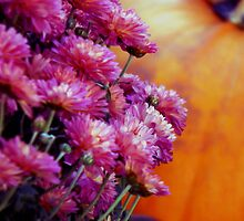 October Harvest by WildThingPhotos