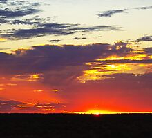 relaxing on the plains  by outbacksnaps