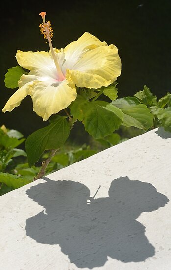 Me and My Shadow by Gary Kelly