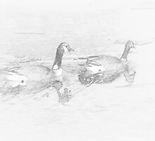 Canada Geese Pencil by srosu