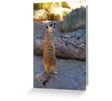 Meer Cat - Taronga Zoo, Sydney Greeting Card