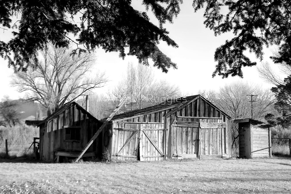 Wood Sheds by Arla M. Ruggles